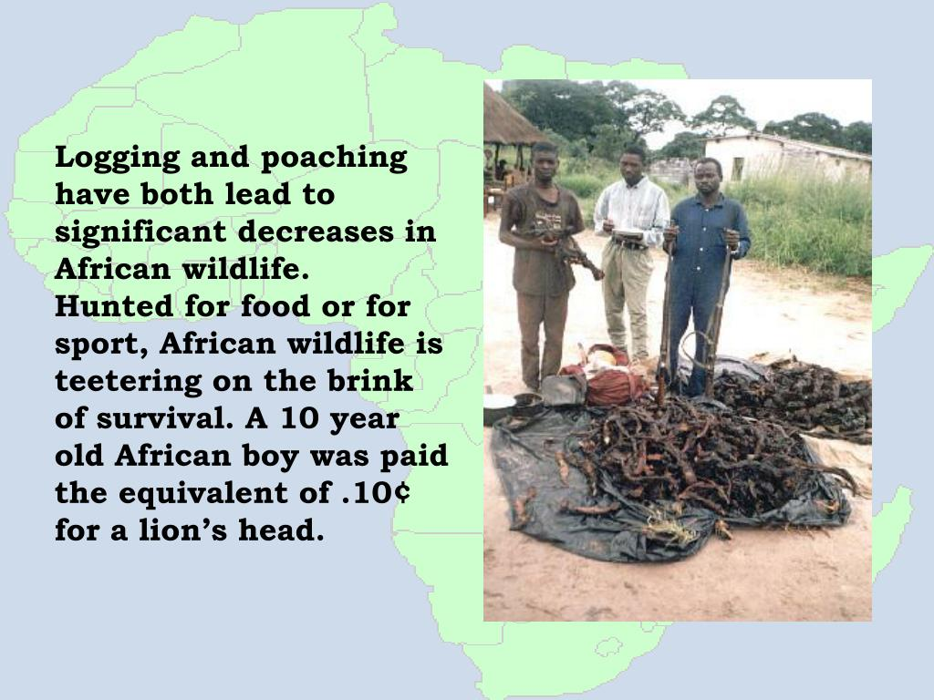 Logging and poaching have both lead to significant decreases in