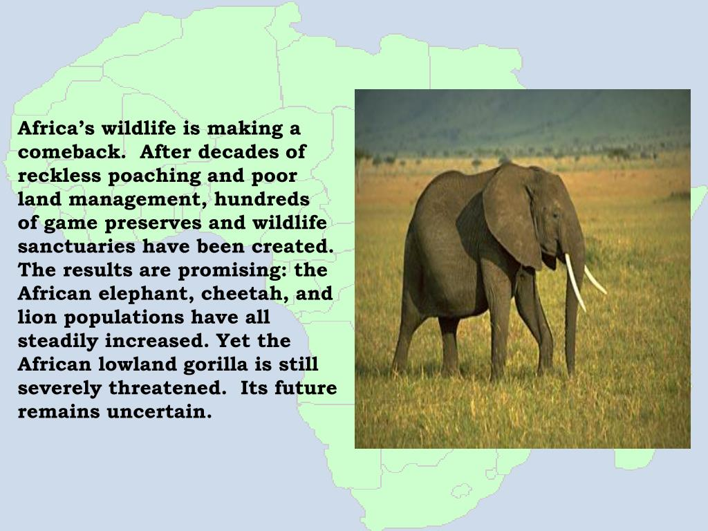 Africa's wildlife is making a