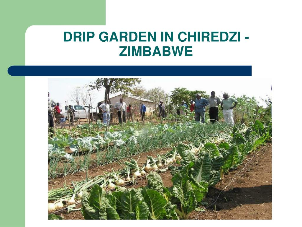 Ppt evaluation of emergency small scale irrigation for Garden design zimbabwe