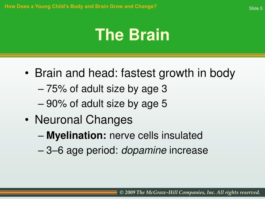 How Does a Young Child's Body and Brain Grow and Change?