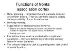 functions of frontal association cortex