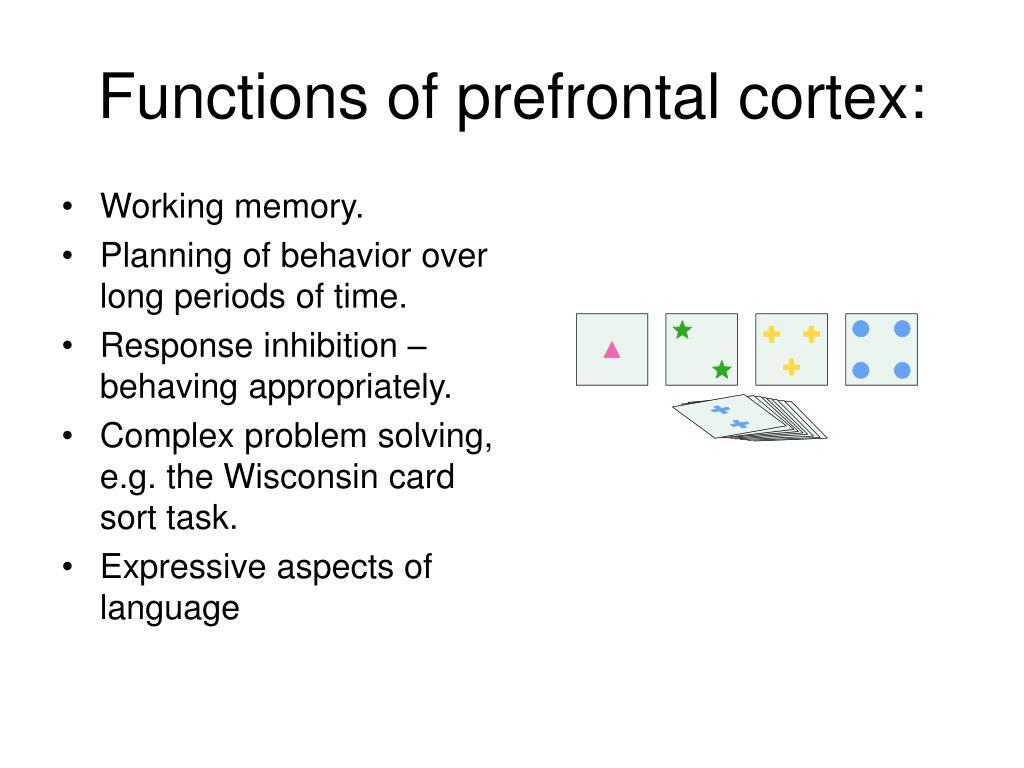 Functions of prefrontal cortex: