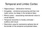 temporal and limbic cortex