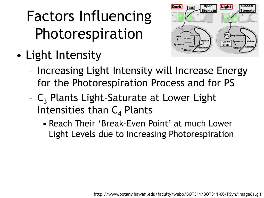 Factors Influencing Photorespiration