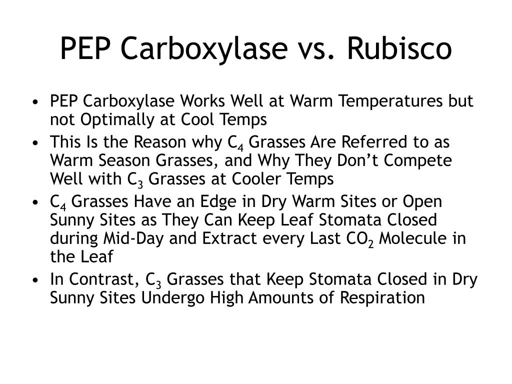 PEP Carboxylase vs. Rubisco