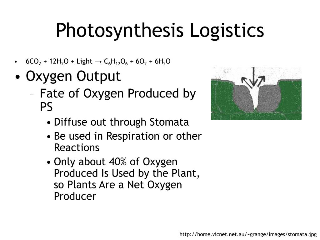 Photosynthesis Logistics