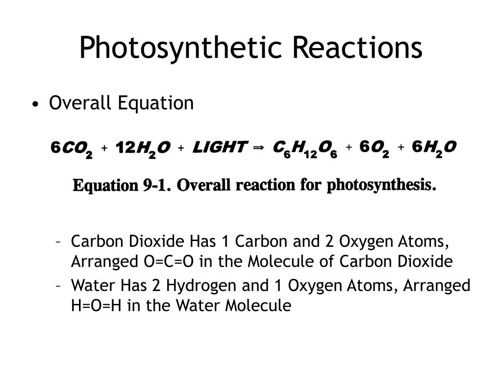 Photosynthetic Reactions