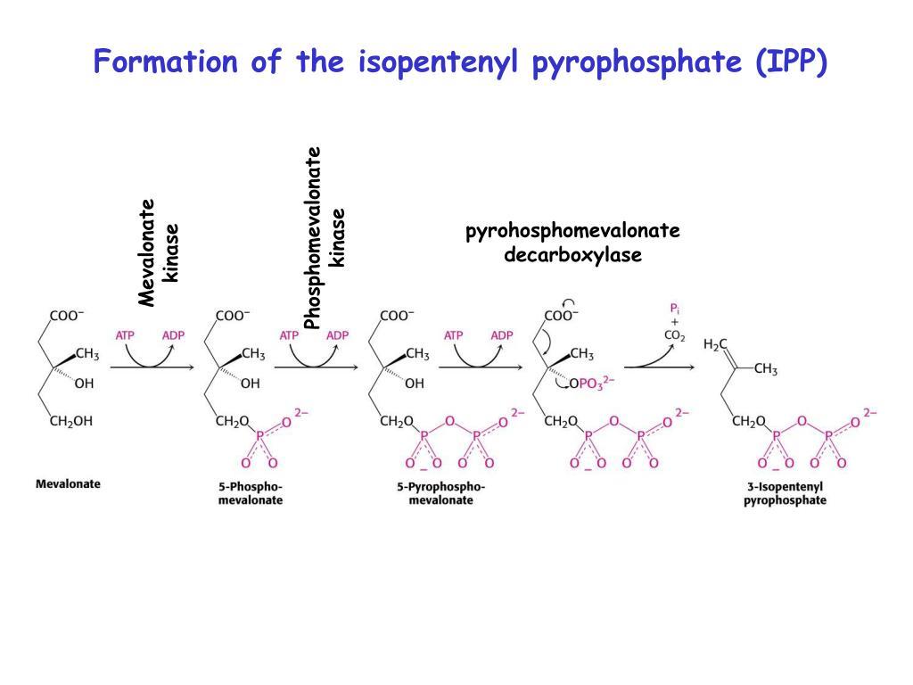 Phosphomevalonate