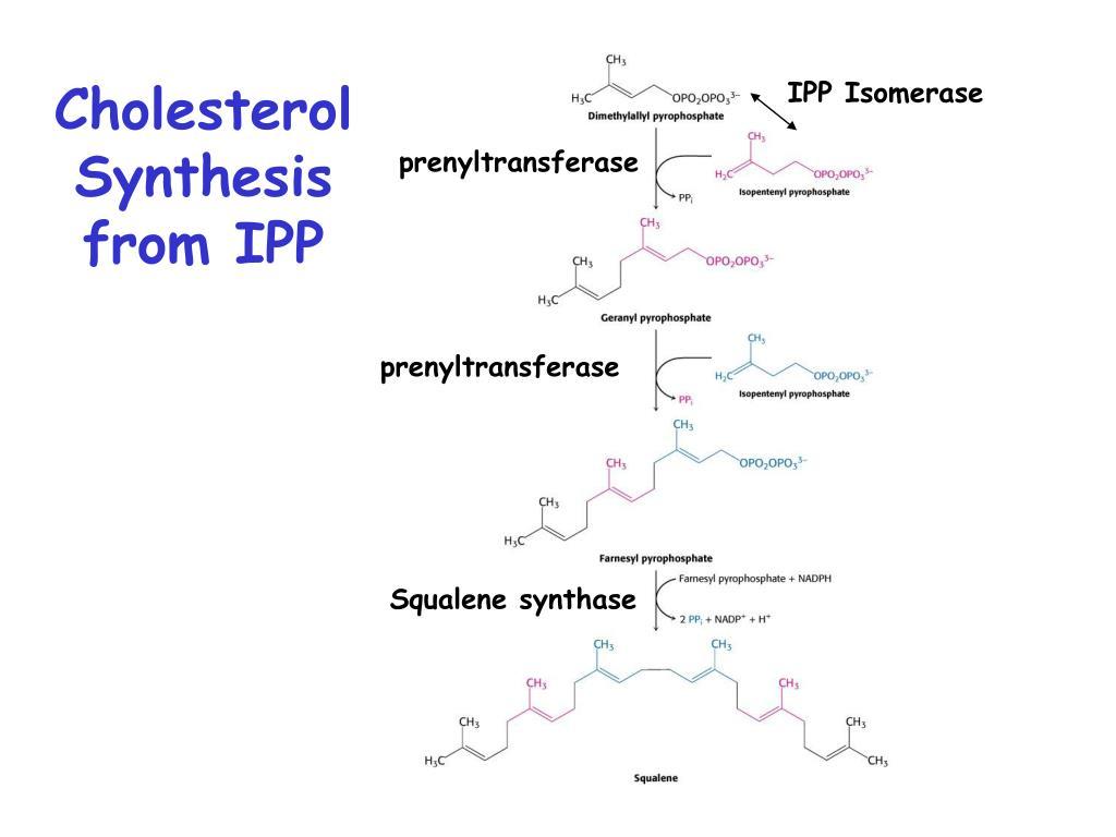IPP Isomerase