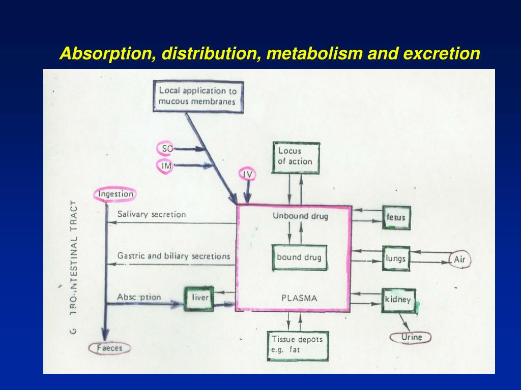 Absorption, distribution, metabolism and excretion
