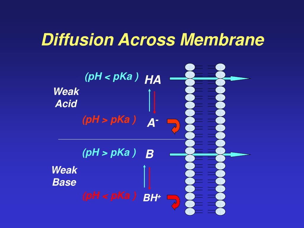 Diffusion Across Membrane