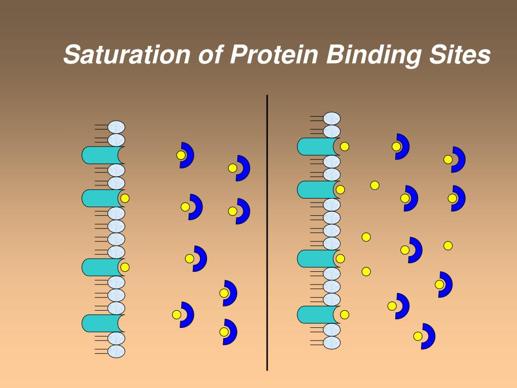 Saturation of Protein Binding Sites