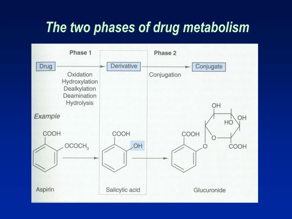 The two phases of drug metabolism