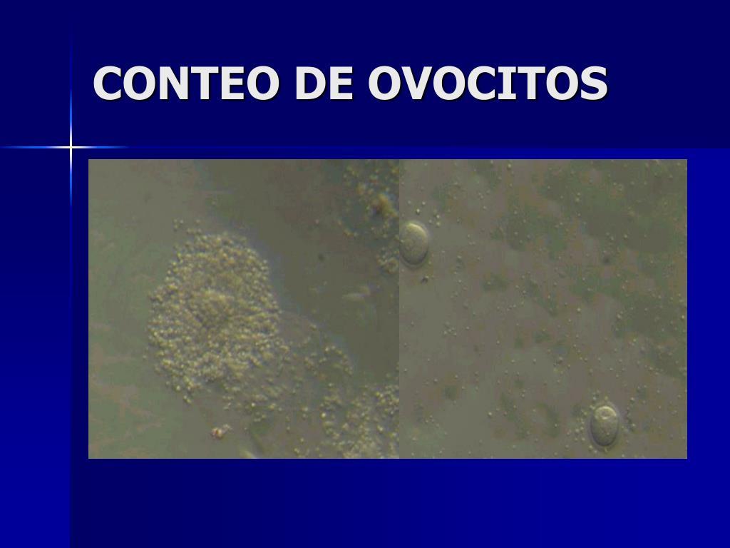 CONTEO DE OVOCITOS