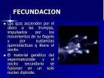 fecundacion4