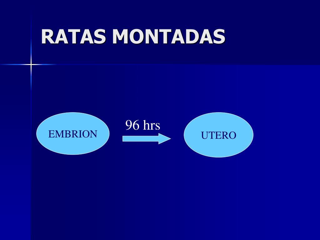RATAS MONTADAS
