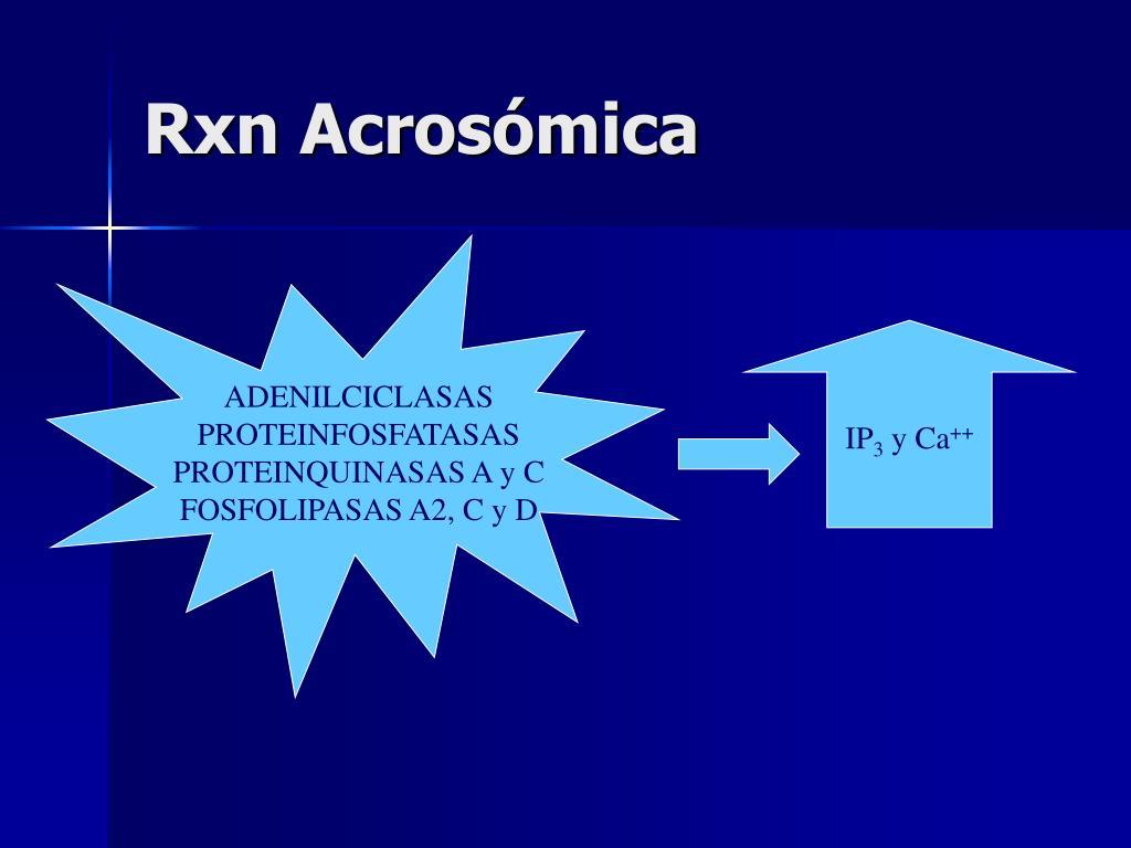 Rxn Acrosómica
