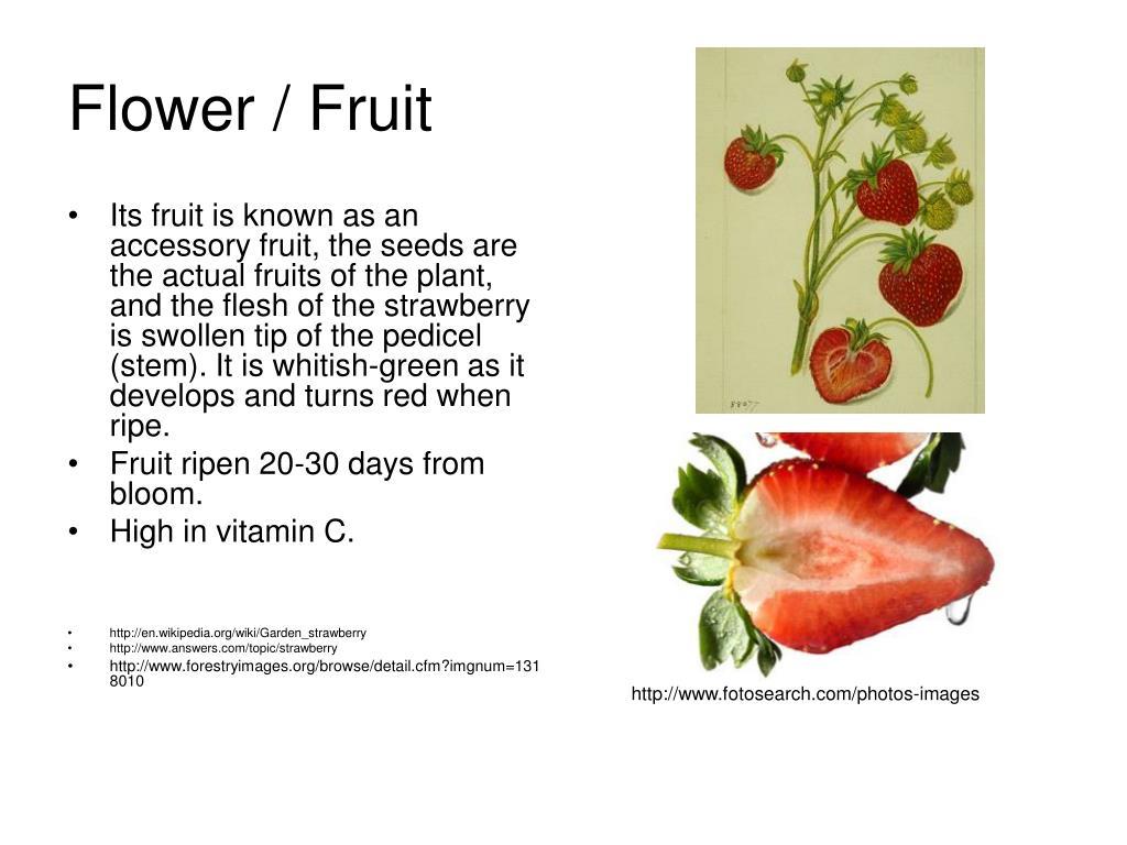 Flower / Fruit