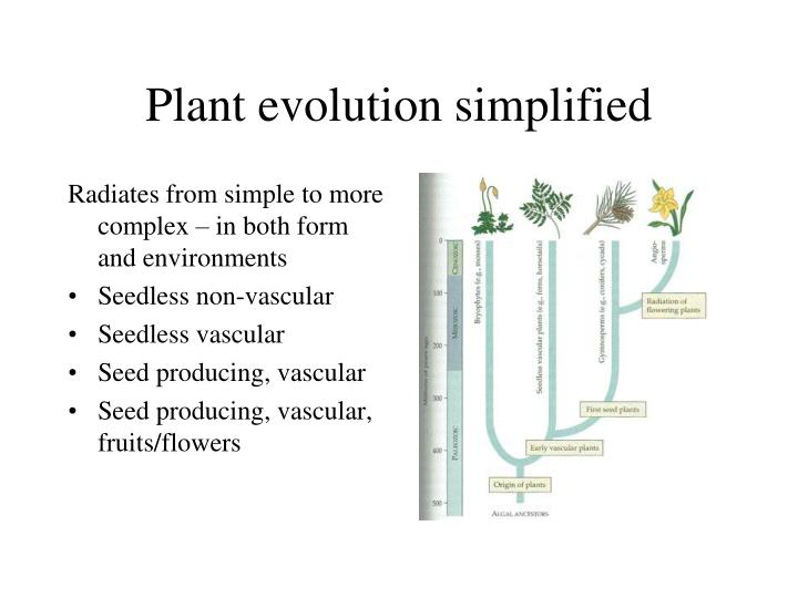 PPT - Domain Eukarya Kingdom Plantae PowerPoint ...