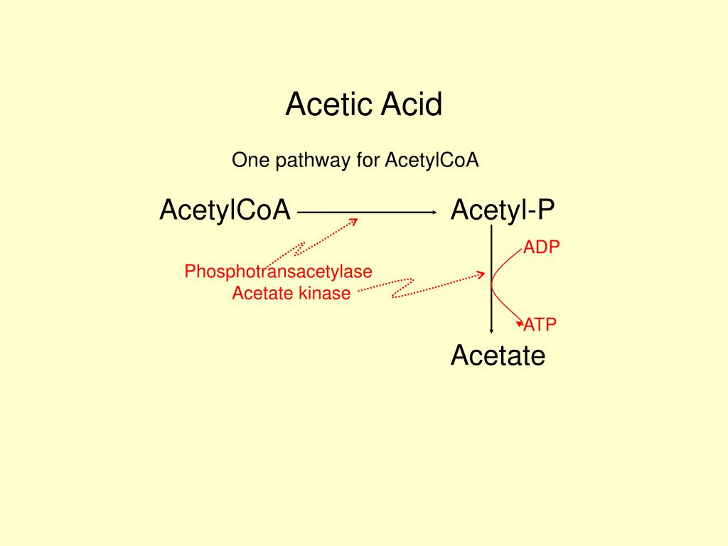propionate biosynthesis
