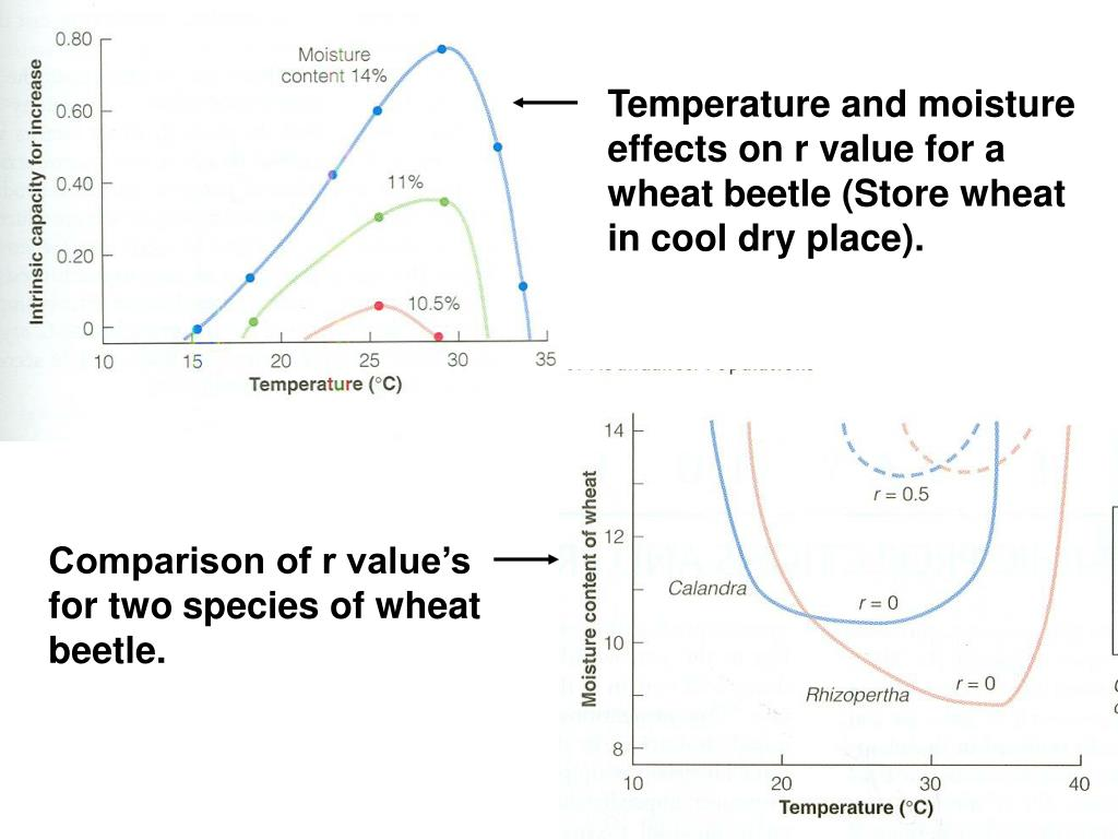 Temperature and moisture effects on r value for a wheat beetle (Store wheat in cool dry place).