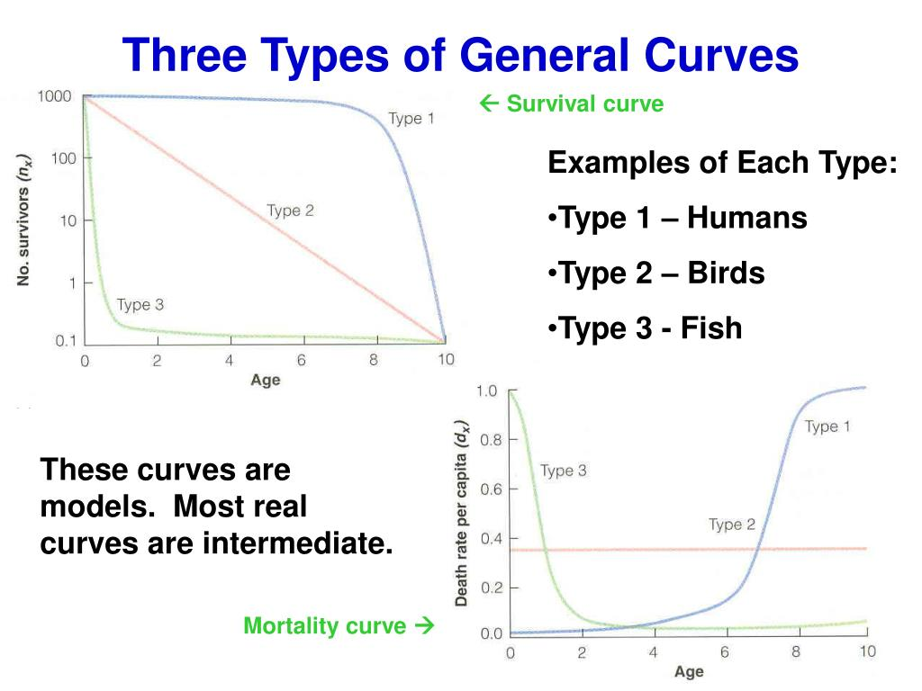 Three Types of General Curves