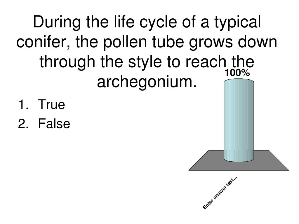 During the life cycle of a typical conifer, the pollen tube grows down through the style to reach the archegonium.