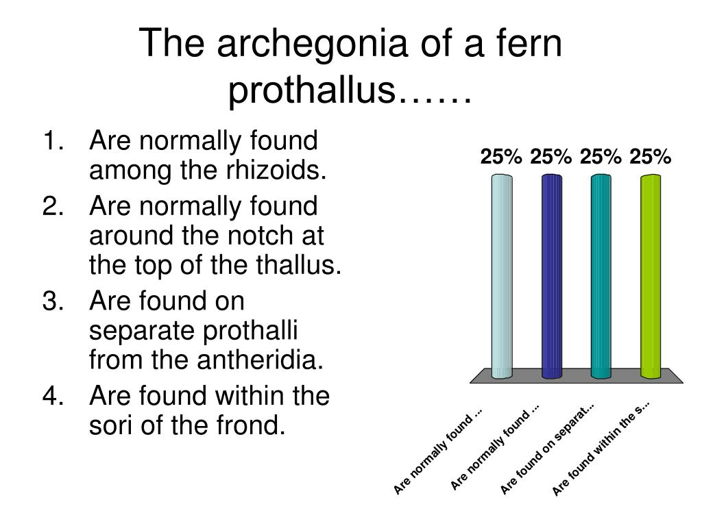 The archegonia of a fern prothallus……