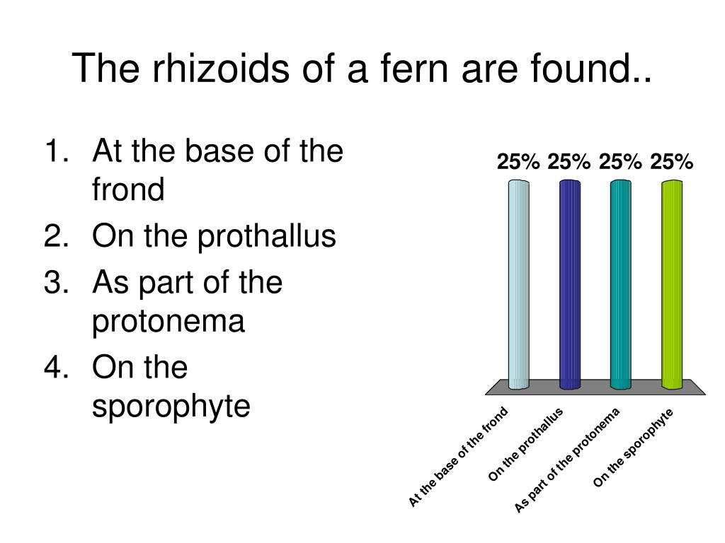 The rhizoids of a fern are found..