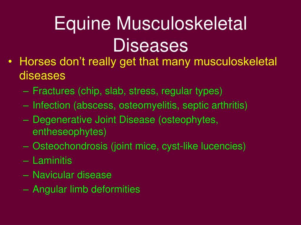 Equine Musculoskeletal Diseases