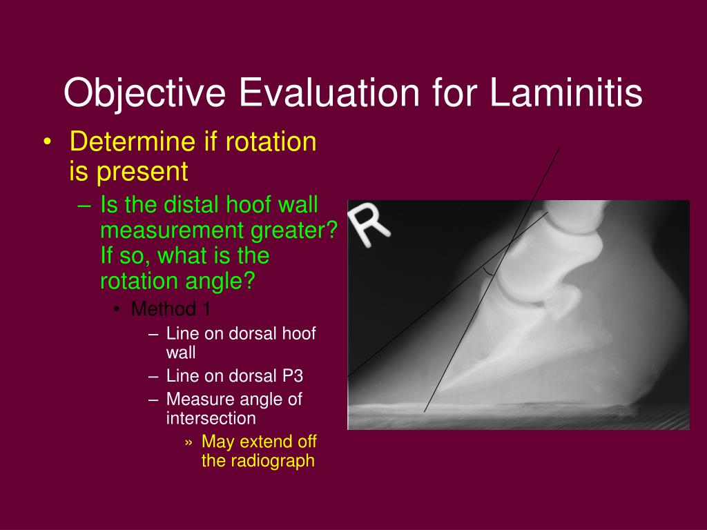 Objective Evaluation for Laminitis