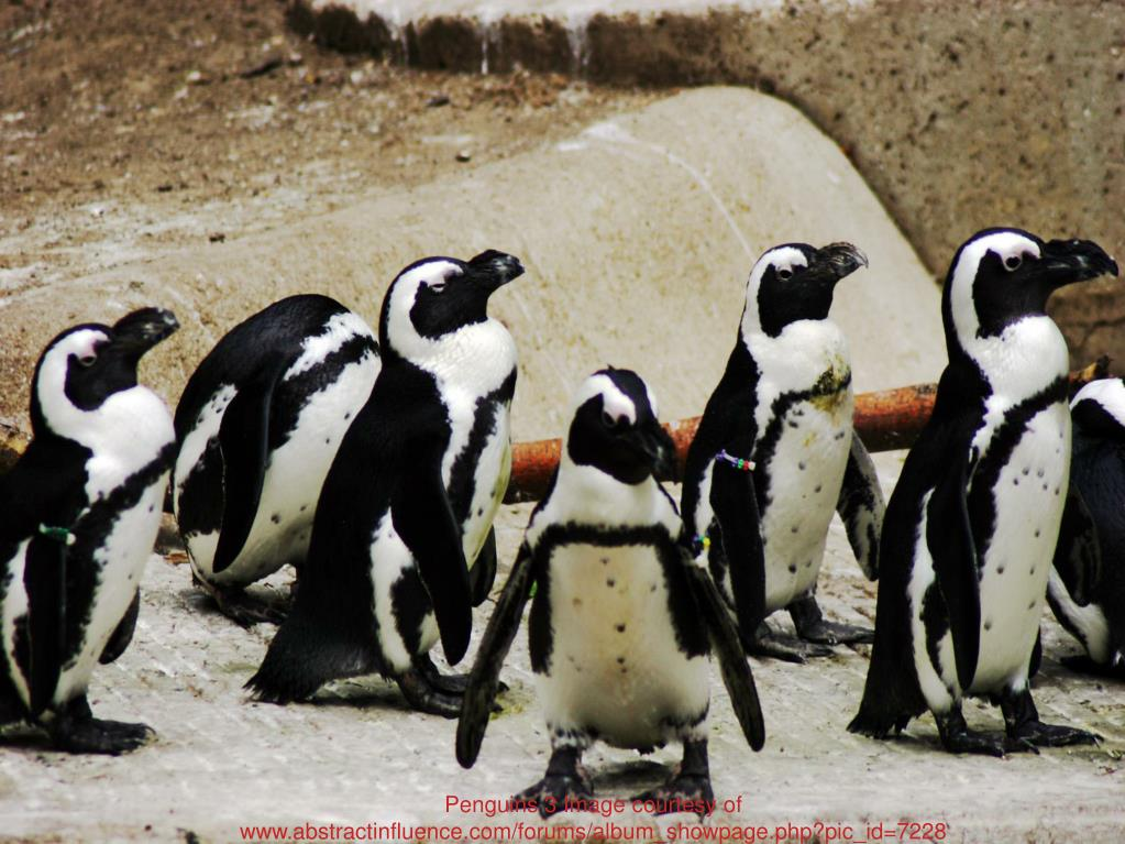 Penguins 3 Image