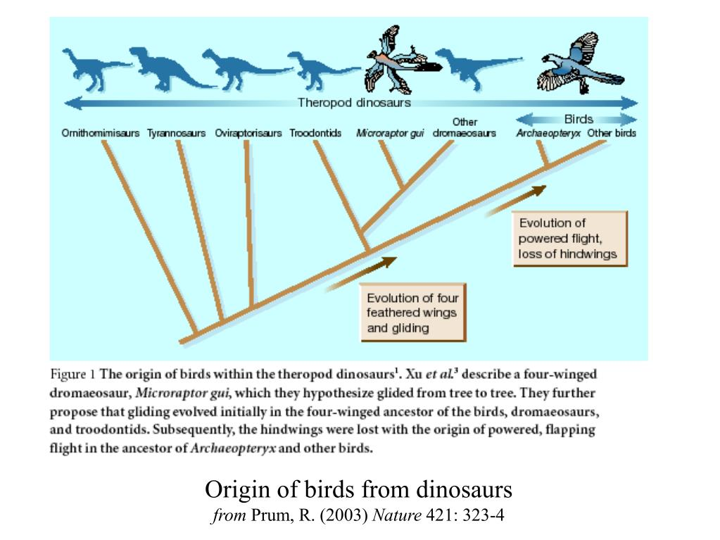 Origin of birds from dinosaurs