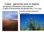 case genome size in plants