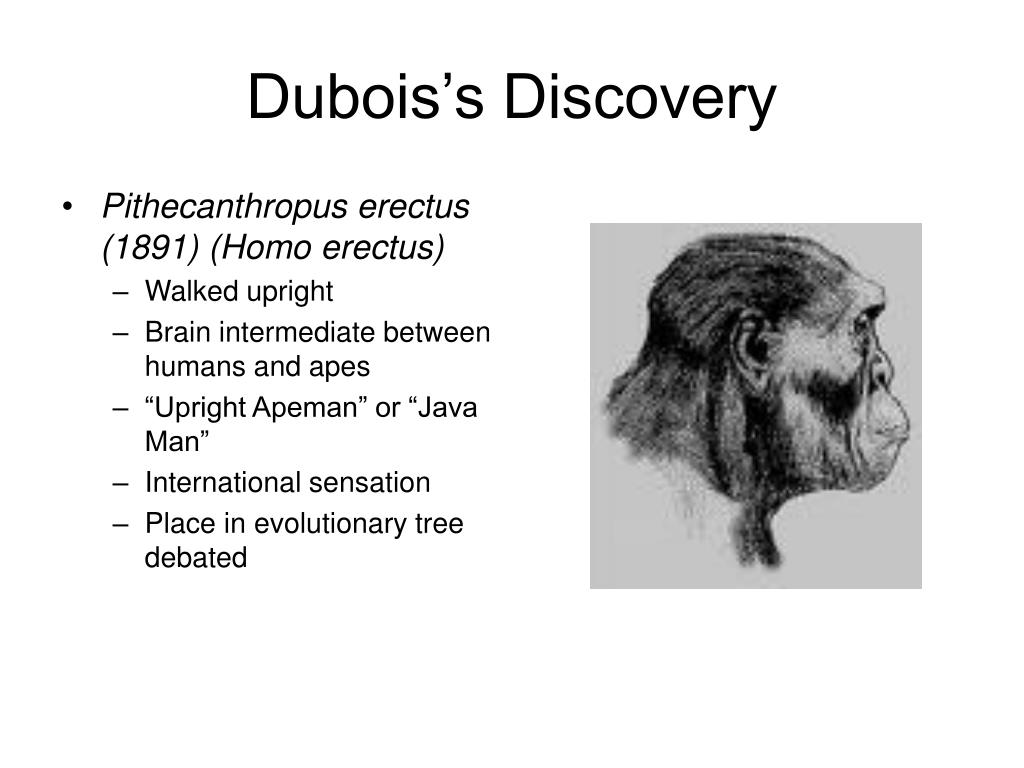 Dubois's Discovery
