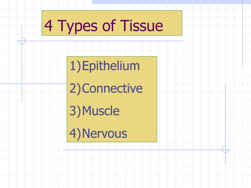 4 Types of Tissue