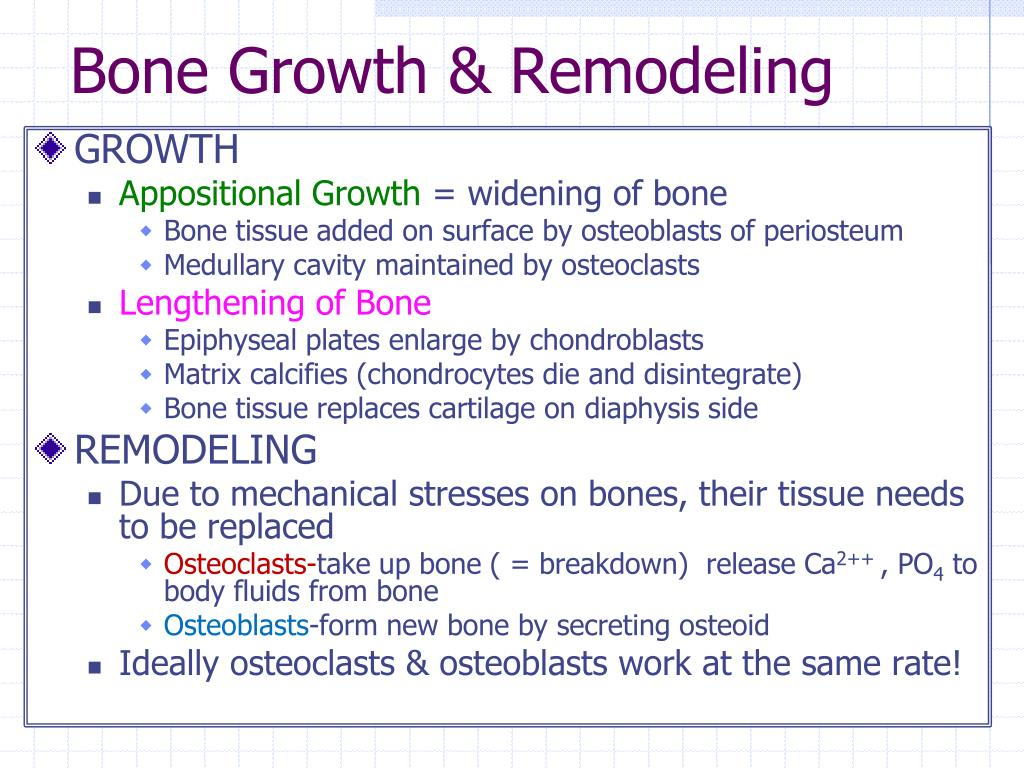 Bone Growth & Remodeling