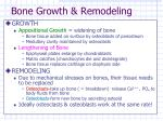 bone growth remodeling