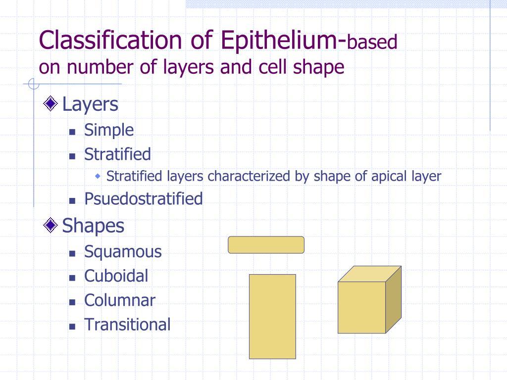 Classification of Epithelium-