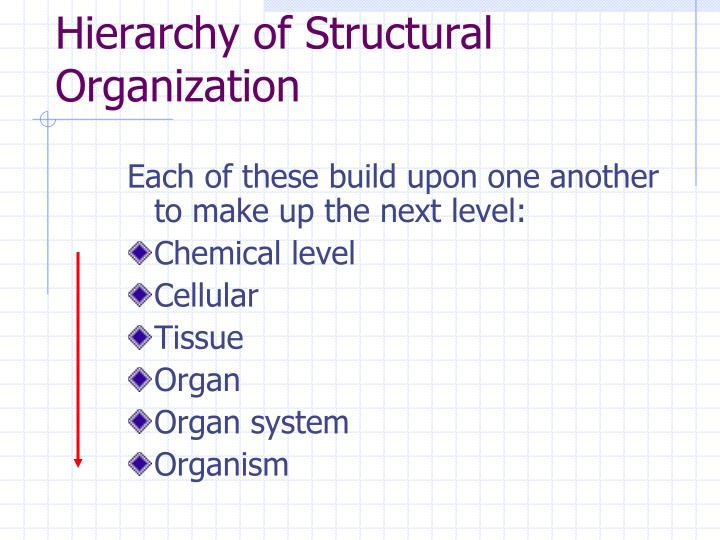 Hierarchy of structural organization l.jpg