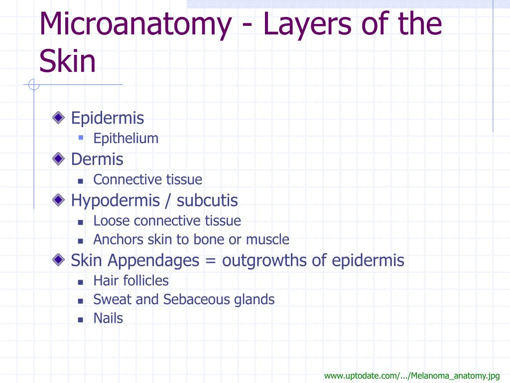 Microanatomy - Layers of the Skin