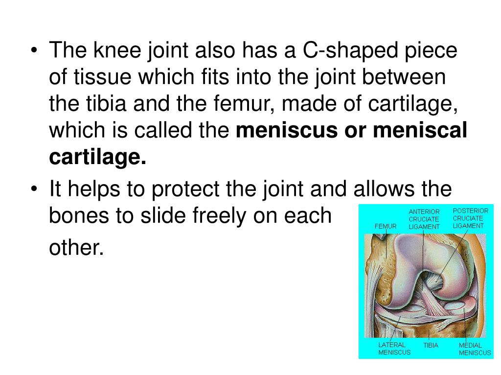 The knee joint also has a C-shaped piece of tissue which fits into the joint between the tibia and the femur, made of cartilage, which is called the