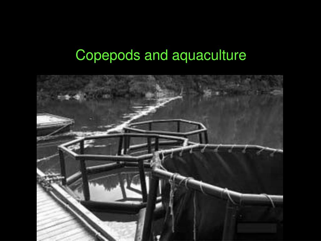 Copepods and aquaculture