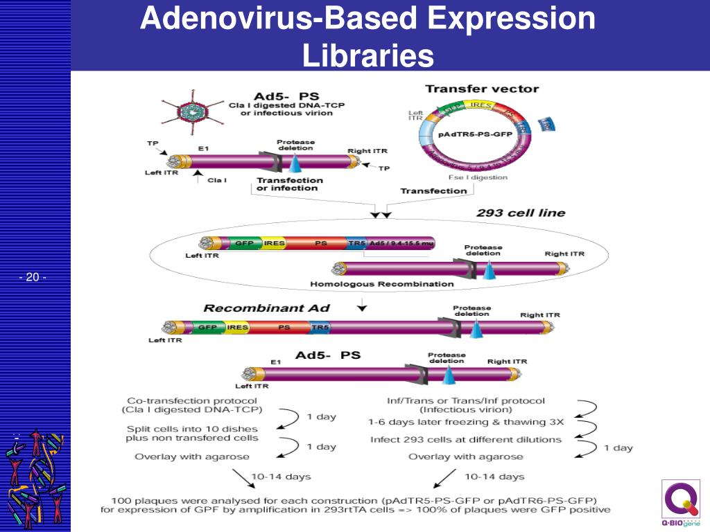 Adenovirus-Based Expression Libraries