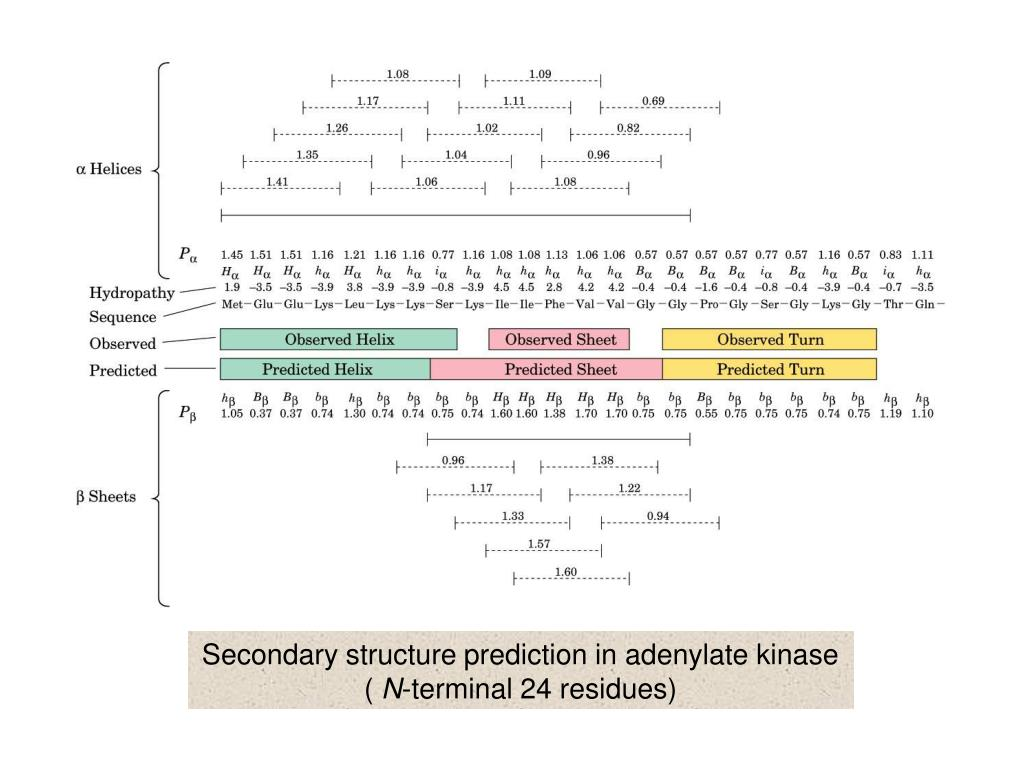 Secondary structure prediction in adenylate kinase (