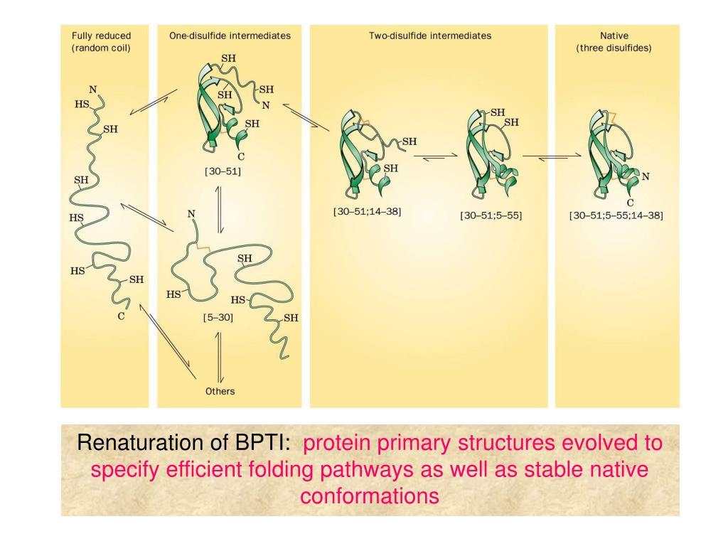 Renaturation of BPTI: