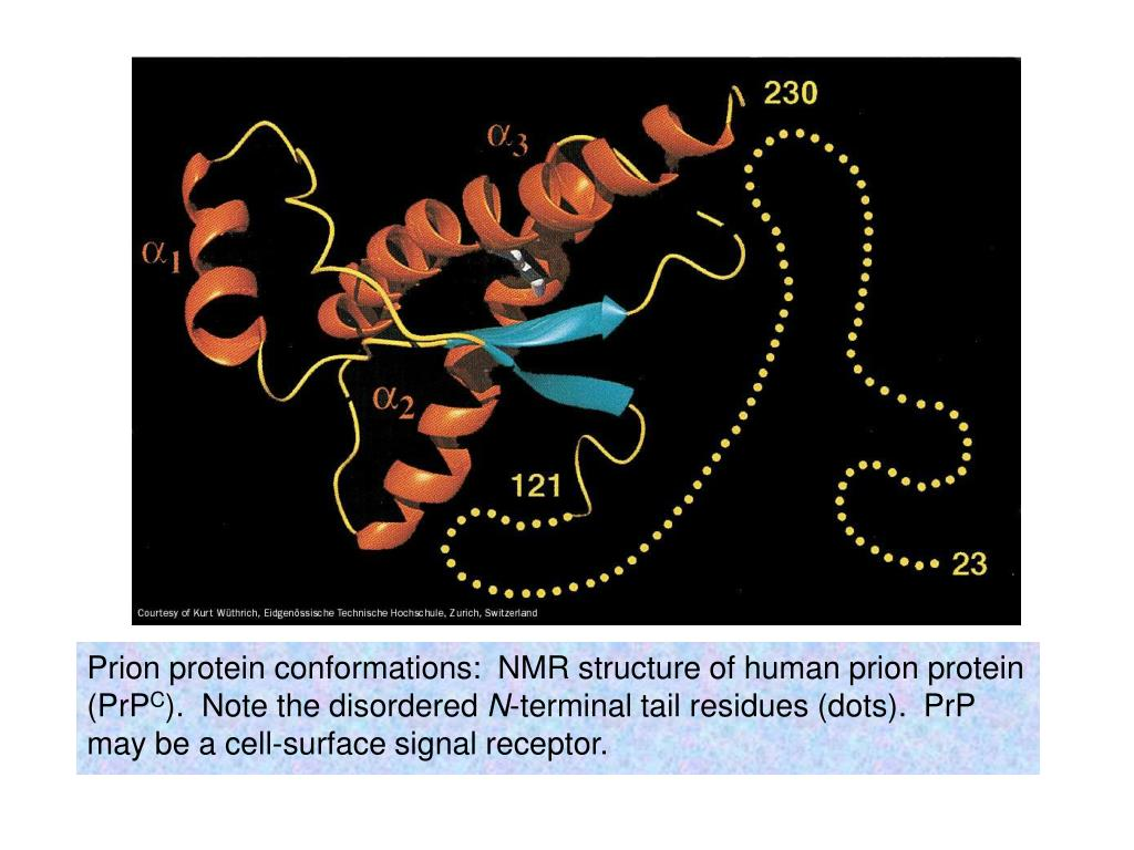 Prion protein conformations:  NMR structure of human prion protein (PrP