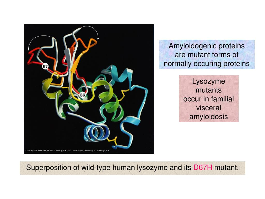 Amyloidogenic proteins