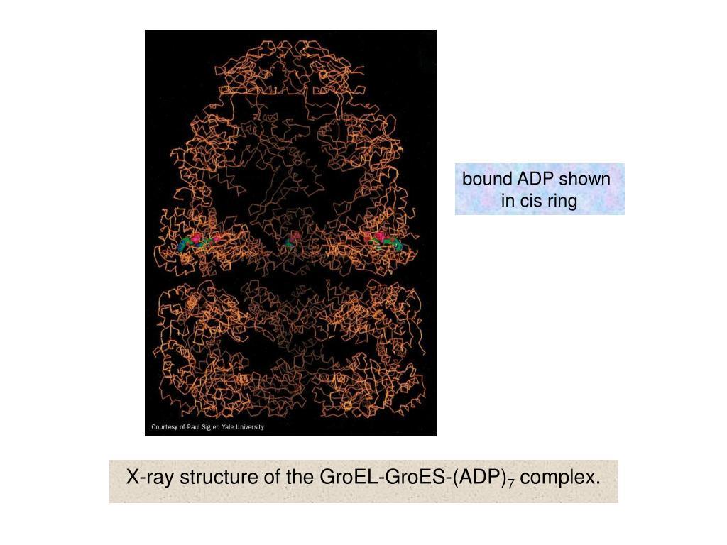 bound ADP shown