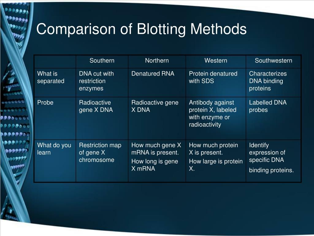 Comparison of Blotting Methods